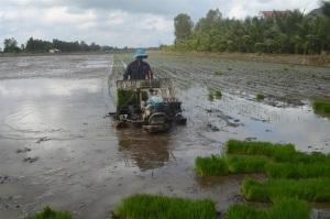 VnSAT hỗ trợ sản xuất lúa gạo bền vững