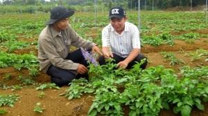 Phát triển cây dược liệu, khoanh nuôi cây đặc sản
