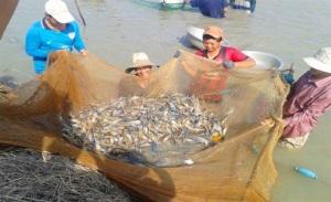 An Giang ứng dụng công nghệ cao nuôi thủy sản