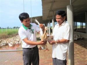 Đầu tư tiền tỷ nuôi vịt sạch