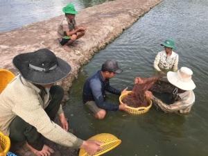 Ông Trần Trung Hiền, Giám đốc Sở NN-PTNT tỉnh Trà Vinh: Ngành thủy sản phát triển đồng bộ cả về 3 mặt