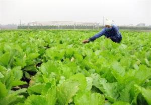 Phát triển 15.000 HTX, liên hiệp HTX nông nghiệp hoạt động hiệu quả: Đẩy mạnh tuyên truyền