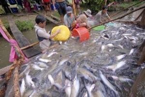 Hướng đến phát triển cá tra bền vững
