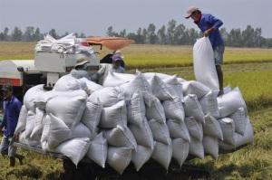 VnSAT Cần Thơ thúc đẩy liên doanh liên kết chuỗi lúa gạo