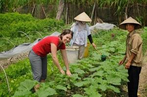 Hà Nội có 50ha rau hữu cơ được chứng nhận