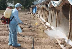 Tăng cường phòng chống dịch bệnh gia súc, gia cầm dịp Tết