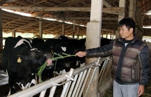 Phát triển chuỗi liên kết chăn nuôi
