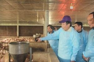 Quảng Trị: Phát triển chăn nuôi heo an toàn theo tiêu chuẩn VietGap
