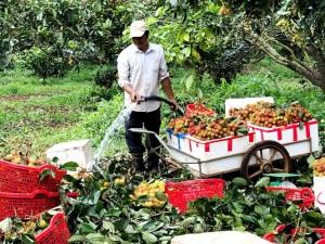 DN đặt hàng nông dân nguồn trái cây, rau củ quả tươi đưa vào siêu thị