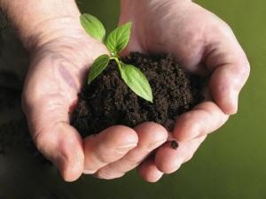 Chiến lược phát triển phân bón hữu cơ