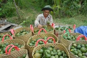 Phân bón hữu cơ sinh học, giải pháp cho nhà nông