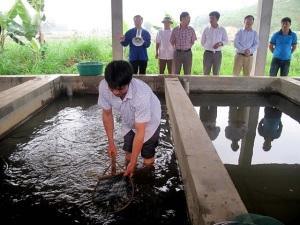 Phòng trị bệnh cá nước ngọt