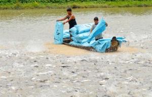 Tập huấn kỹ thuật nuôi cá tra VietGAP