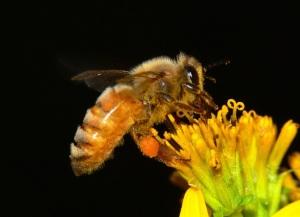 Giải pháp bền vững cho nghề nuôi ong