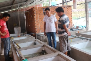 Bỏ nghề giám đốc về nuôi lươn giống mỗi năm lãi trên 1 tỷ đồng