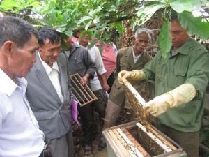 Phát triển nghề nuôi ong