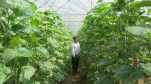 Thu 2 tỷ đồng/năm từ trang trại chủ yếu trồng dưa lưới và dưa chuột