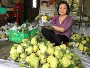 Cần nhân rộng mãng cầu na hạt lép Kim Mai