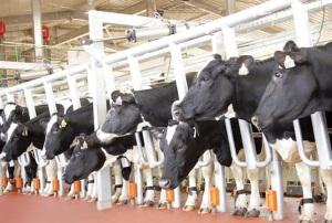 TH nhận giải thưởng Trang trại chăn nuôi bò sữa tốt nhất