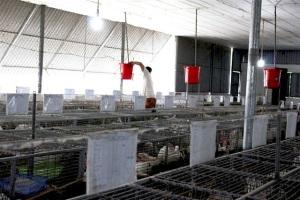 Nuôi thỏ sinh sản thu nhập hàng chục triệu đồng/tháng