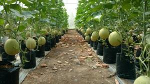 Mạnh dạn khởi nghiệp từ nông sản sạch