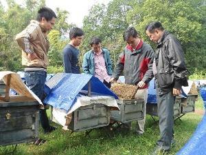 VinaCert chứng nhận VietGAP chăn nuôi ong an toàn tại Cơ sở ong mật Vinh Hoa