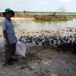 Mô hình nuôi vịt trời ở xứ Quảng, lãi vài trăm triệu đồng/năm