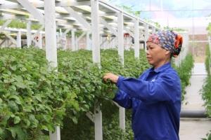 Chính thức ban hành bộ tiêu chuẩn nông nghiệp hữu cơ quốc gia