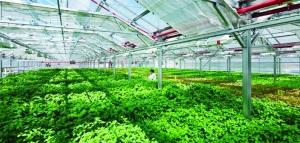 CPTPP và cơ hội cho nông sản Việt: Tránh phụ thuộc vào một thị trường