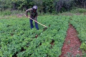 Vùng biên chuyển đổi cây trồng, ứng phó hạn hán