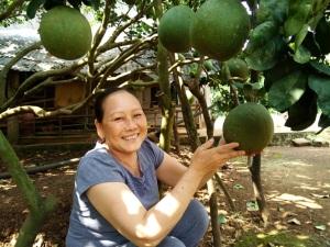 Nông nghiệp Việt Nam Khuyến nông Bưởi da xanh - cây trồng đột phá