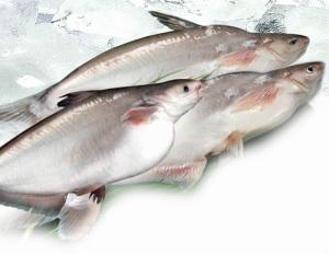 Sửa lại nghị định về cá tra