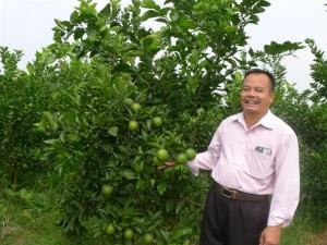 Người có diện tích cam VietGAP nhiều nhất Hà Nội