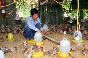 Chăn nuôi an toàn dịch bệnh