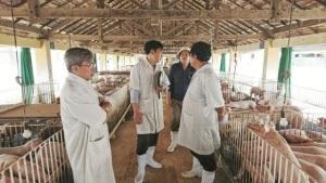"""VinaCert hưởng ứng lời kêu gọi của Bộ trưởng Bộ Nông nghiệp và Phát triển Nông thôn: Chung tay """"giải cứu"""" ngành chăn nuôi lợn"""