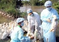 Tăng cường công tác phòng, chống vi rút cúm A/H7N9 và các chủng vi rút cúm gia cầm