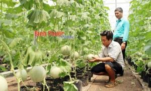 Đứng vững từ trồng rau, quả sạch