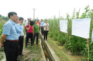 Lợi ích bền vững từ lớp IPM