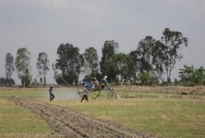 Kiên Giang: Hướng tới 100.000 ha cánh đồng lớn