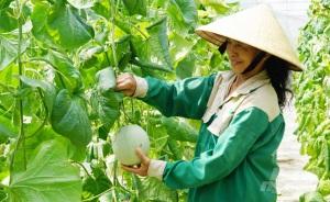 Liên kết tạo chuỗi giá trị bền vững, phát triển nông nghiệp sạch