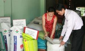 Lúa gạo Cát Tiên trước cơ hội mới