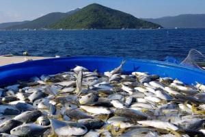 Nơi đưa nuôi biển Việt Nam lên tầm cao mới