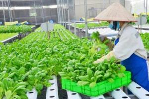 Nâng cao vị thế nông nghiệp