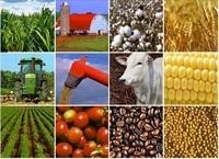 Phát triển chuỗi giá trị nông sản là sứ mệnh