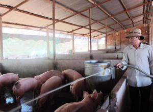 Lâm Đồng: Thiết lập 4 vùng trọng điểm chăn nuôi an toàn