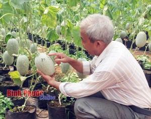 Thu lợi cao từ nông sản VietGAP