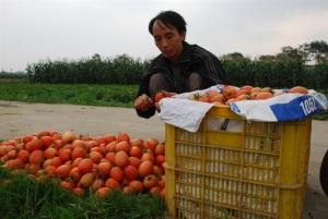 Phối hợp tiêu thụ nông sản sạch