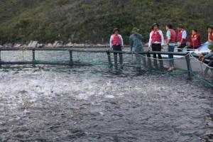 Trang trại nuôi cá lồng biển quy mô công nghiệp đạt chuẩn VietGAP
