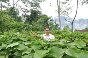 Mô hình trồng su su lấy ngọn tại Tuyên Quang