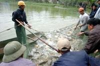 Sử dụng thuốc, hóa chất nuôi trồng thủy sản